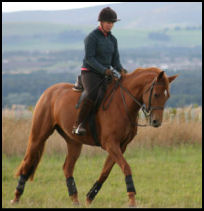 Blacklaw Firestorm 2003 mare by Busk Hill Gunner