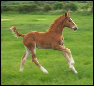 Pinocchio's first foal