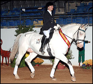 Halifax Middelsom Knabstrupper stallion