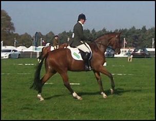 Blacklaw Thymelord Dressage
