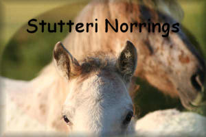 Stutteri Norrings link button